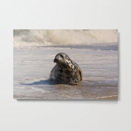 horsey seal Metal Print