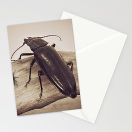 Viewpoints Stationery Cards