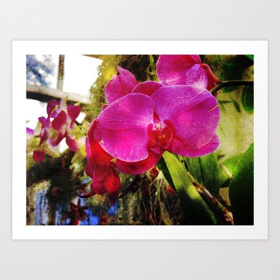orchids3 Art Print