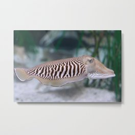 cuttlefish ocean animal fish Metal Print
