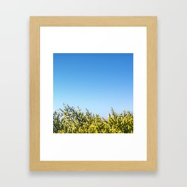 Blue sky copy space square background with coniferous fir tree Framed Art Print