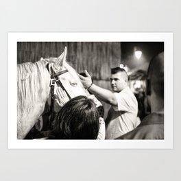 white horse Golega Art Print