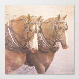 Draft Horses 2 Canvas Print