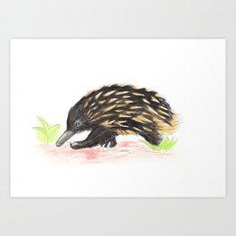 The Wondering Echidna Art Print