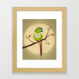 Green Cheek Conure Framed Art Print