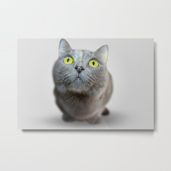 The Cat's Stare Metal Print