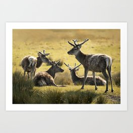 Reindeers of Scotland Art Print