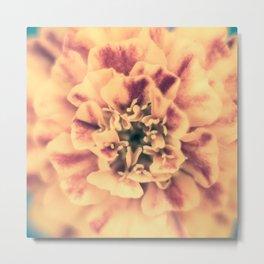 Autumnal Marigold - French Marigold Metal Print