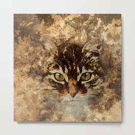 Dirty cat Metal Print