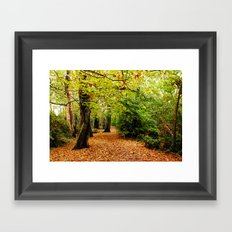 Autumn in the Forest Framed Art Print
