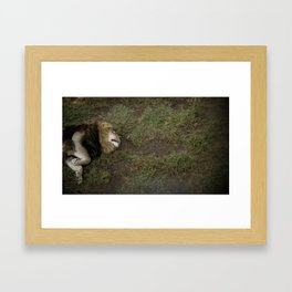 In the jungle, the mighty jungle... (Melbourne, 2010) Framed Art Print