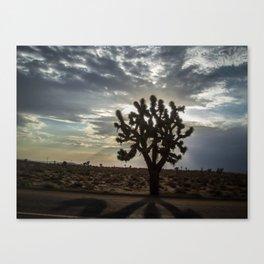 the joshua tree  Canvas Print