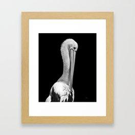 'Portrait of a Pelican' (C)Joel Stephen Birnie 2018 Framed Art Print