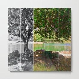tree collage Metal Print