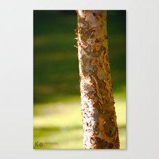 Skin  Canvas Print