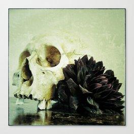 Vanitas Black Dahlia R Canvas Print