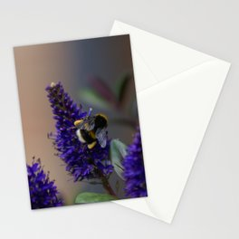 Bee Lavender - Bumble Bee in Garden Stationery Cards