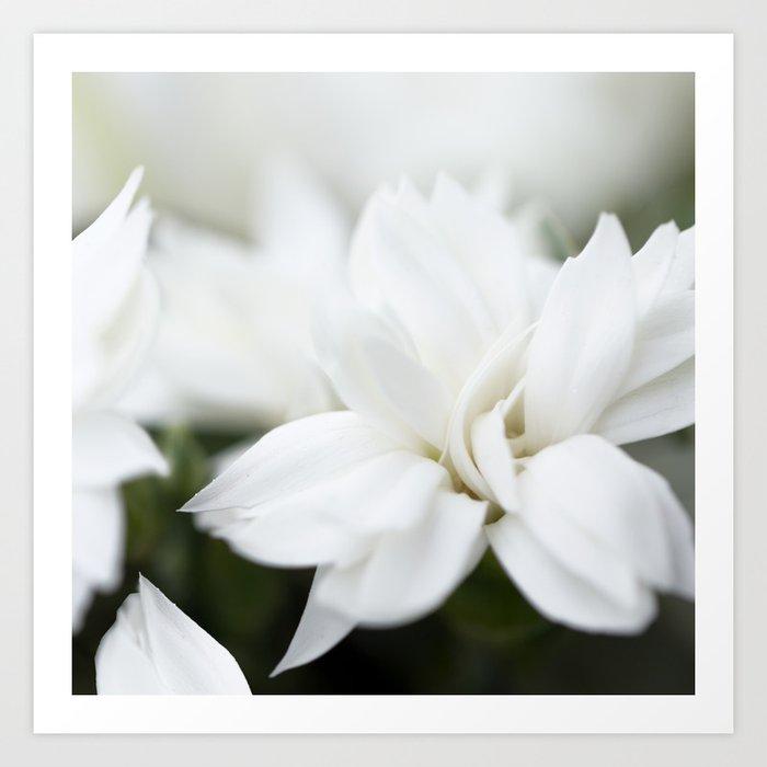 Snow White Flowers on a Dark Background #decor #society6 #buyart Kunstdrucke