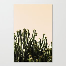 cactus nature x Canvas Print