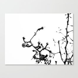 Strange Trees 7 Canvas Print