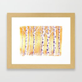 Golden Birch Trees Framed Art Print
