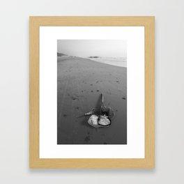 Snail Net on the Shore Framed Art Print