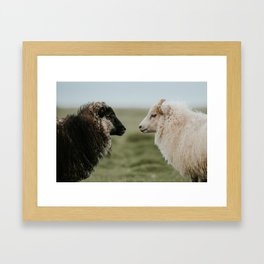 Sheeply in Love - Animal Photography from Iceland Framed Art Print