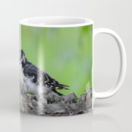 Downy Woodpecker! Coffee Mug