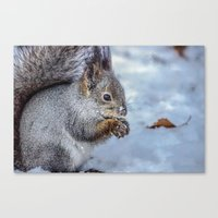 squirrel Canvas Prints featuring Squirrel by Svetlana Korneliuk