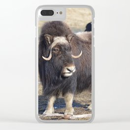 Arctic Muskox Clear iPhone Case