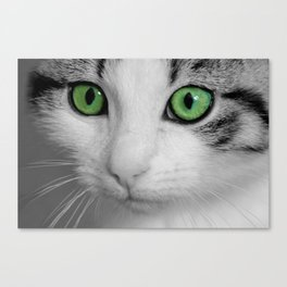 KITTURE Canvas Print