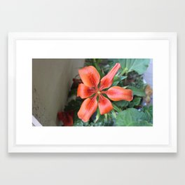 Vivid Petals Framed Art Print