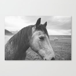Horse Print in Black and White Canvas Print