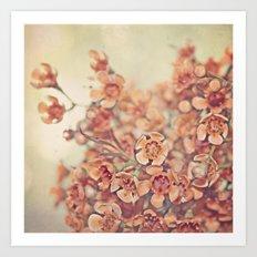 Orange Waxflowers Art Print