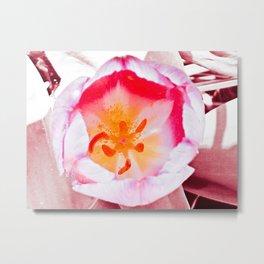 Pink Orchidaceae Metal Print