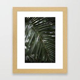 Plant - Fern 2 Framed Art Print