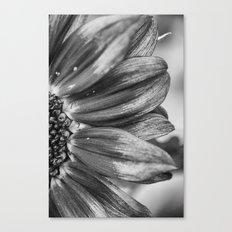 B&W Sunflower Canvas Print