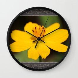 Cosmos Sulphureus named Ladybird Dwarf Lemon Wall Clock