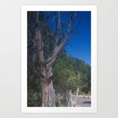 Grand Canyon Tree Art Print