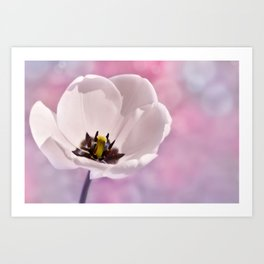 Tulip white macro 077 Art Print
