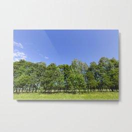 Trees in Spring Metal Print