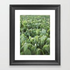 Green Textures - Food - Vegetables - south - Italy - puglia - apulia - mediterranean Framed Art Print