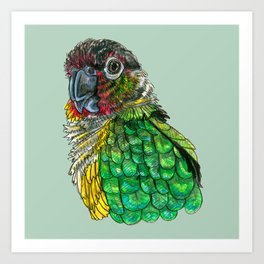 Green Cheeked Conure Art Print