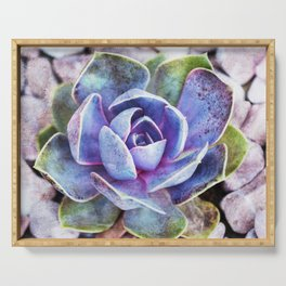 Colorful cactus Serving Tray