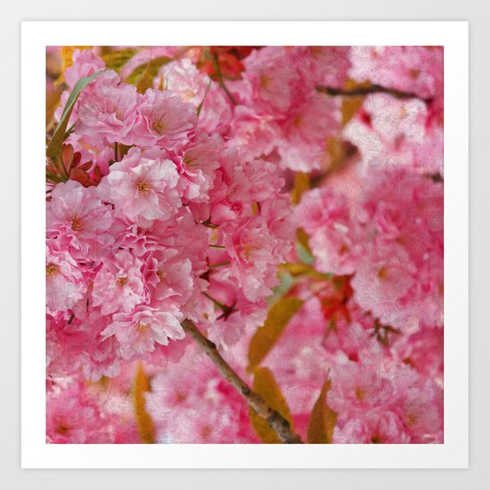 Cherry blossom #4 Art Print