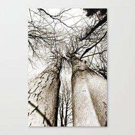 Twin Trees Canvas Print