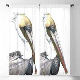 Pelican Portrait Blackout Curtain