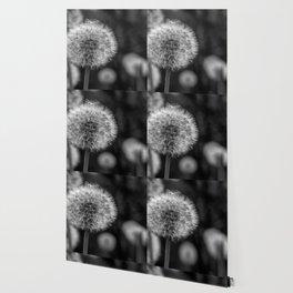 Monochromatic dandelion on black Wallpaper