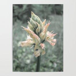 Wild forest flower Poster