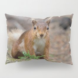 Red squirrel Pillow Sham